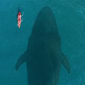Whale [LG Home+]